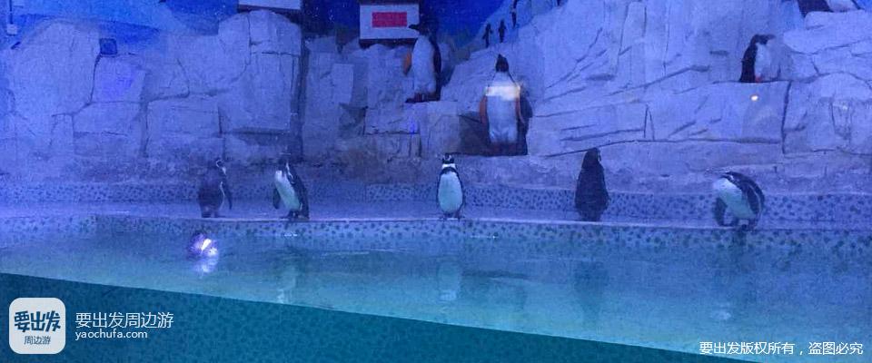 河南| 开封 东京极地海洋馆,畅游蓝色世界